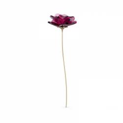 Garden Tales Róża